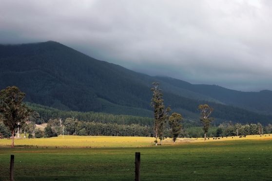 Cuckoo farm land.
